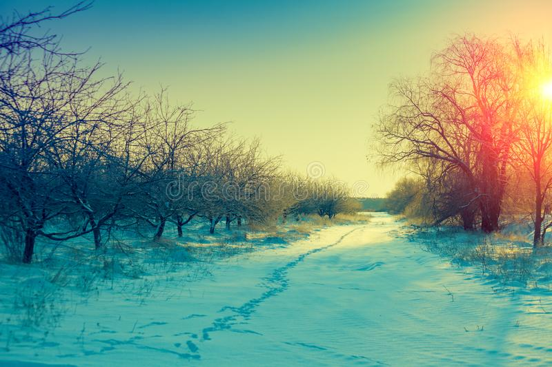Winter morning in a countryside stock photo
