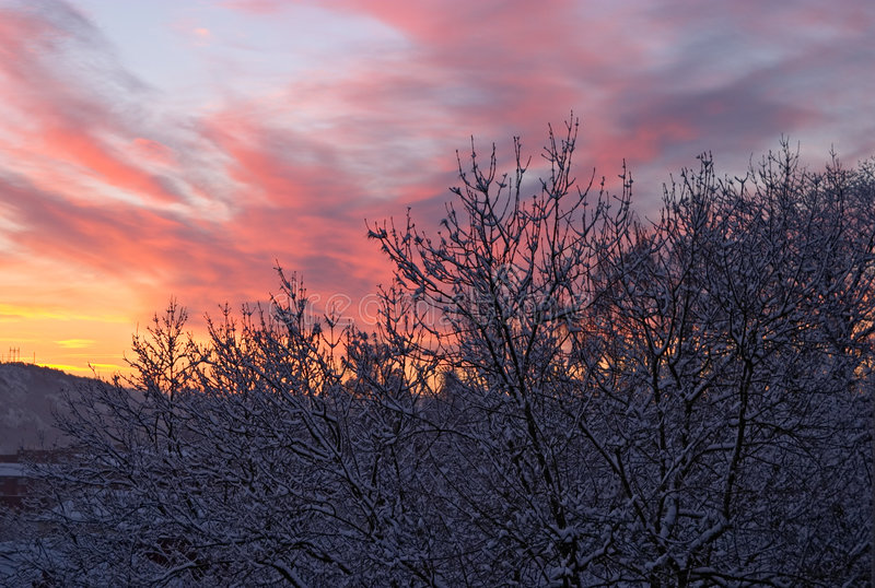 Winter morning, dawn royalty free stock photos