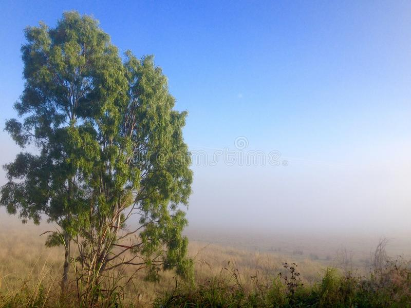 Winter morning fog cattle grazing farm land Queensland Australia stock images