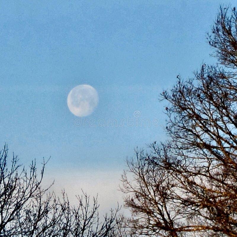 Winter morning moon stock photography