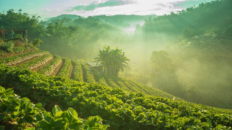Winter morning in Strawberry Farm stock photography
