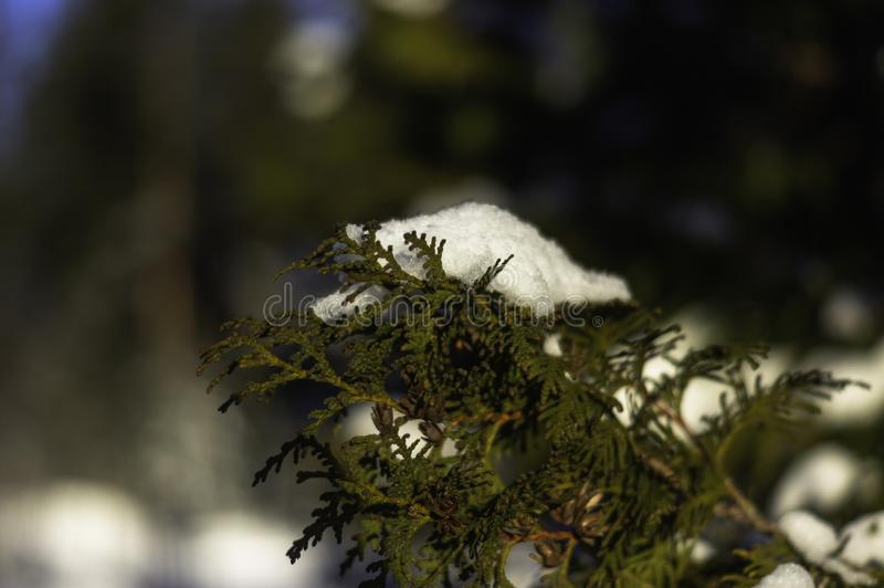 Winter morning sweden. Cold winter morning in the deepest forest of Sweden royalty free stock images