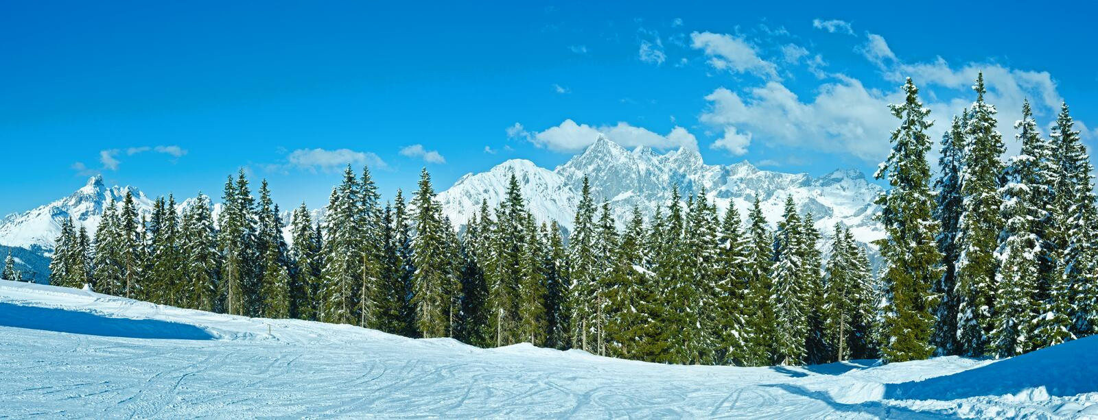 Winter mountain fir forest panorama. Winter mountain fir forest snowy landscape (top of Papageno bahn - Filzmoos, Austria royalty free stock image