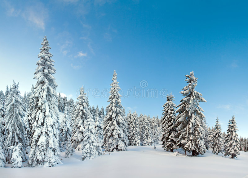 Winter mountain forest. Winter calm mountain landscape with snow-covered spruce-trees on a forefront. Four shots stitch image royalty free stock image