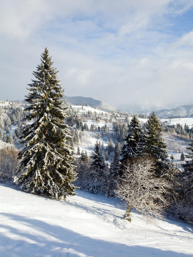 Winter mountain landscape. Winter calm mountain landscape with rime and snow covered spruce trees royalty free stock image