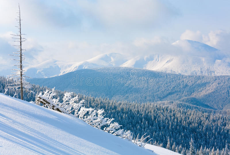 Winter mountain landscape. Morning winter calm mountain landscape with beautiful fir trees on slope (Kukol Mount, Carpathian Mountains, Ukraine stock photography