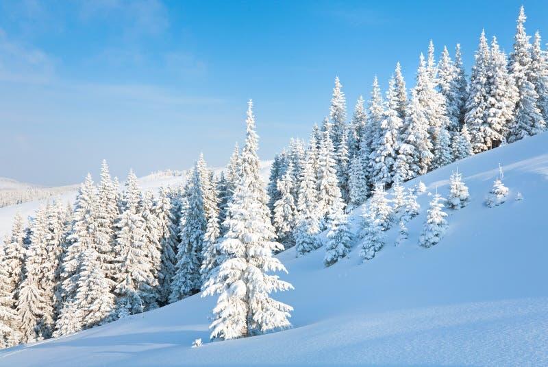 Winter mountain landscape. Morning winter calm mountain landscape with beautiful fir trees on slope (Kukol Mount, Carpathian Mountains, Ukraine stock photos