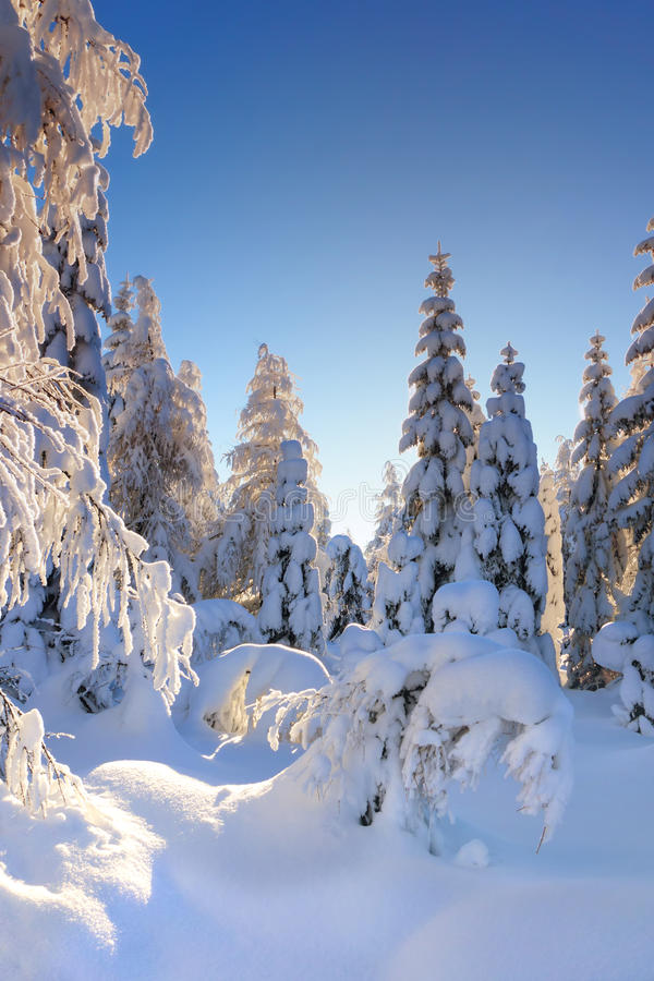 Free Winter Mountain Landscape Royalty Free Stock Photo - 78844365