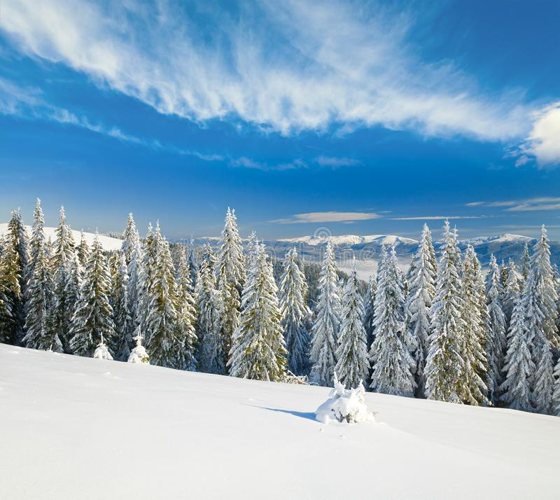 Winter mountain landscape. Winter calm mountain landscape with rime and snow covered spruce trees  view from Bukovel ski resort Ukraine to Svydovets ridge royalty free stock images