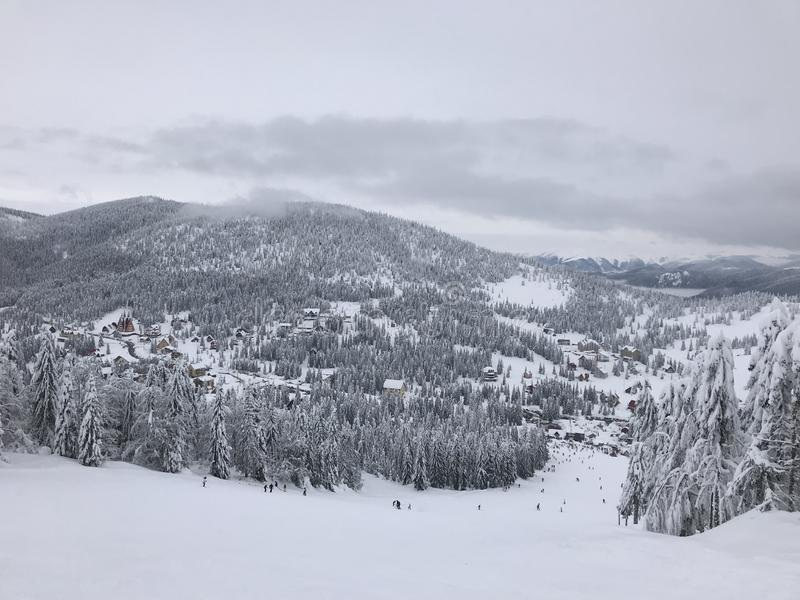 Winter Mountain Landscape. S with Trees stock image