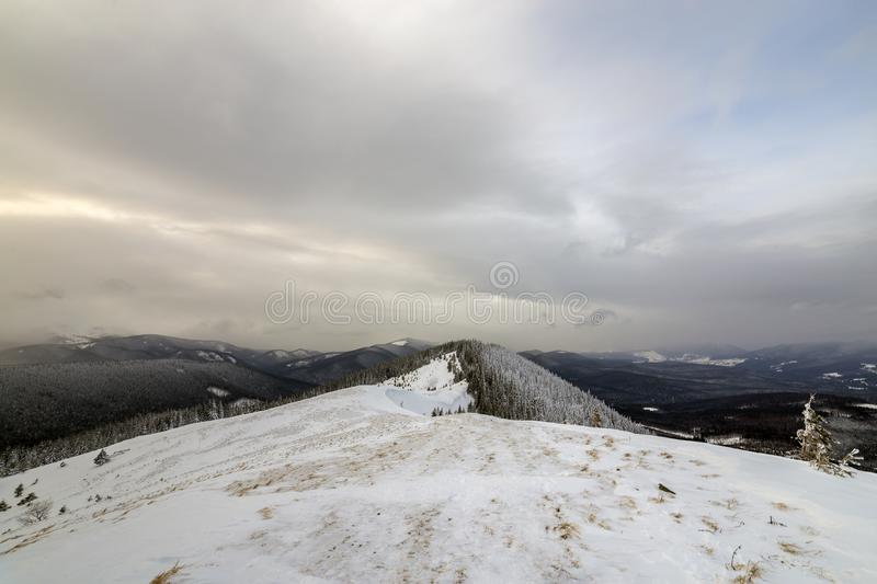 Winter mountain landscape, snowy peaks and spruce trees under cloudy sky on cold winter day.  stock image