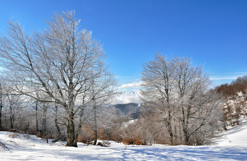 Winter on the mountain. From Macedonia stock images
