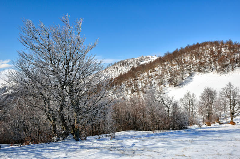Winter on the mountain. From Macedonia - Europe stock images