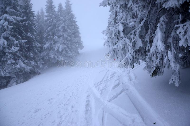 Winter mountain misty trail covered with snow. Trees with snow. Winter mountain trail covered with snow. Trees with snow. Winter forest in mountains, Pilsko stock photos