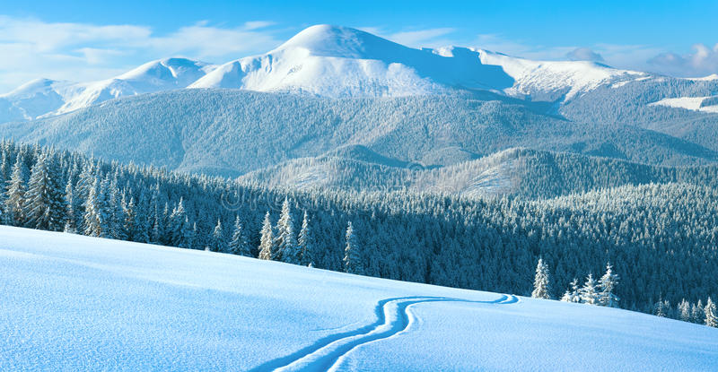 Winter mountain panorama with ski track. Morning winter calm mountain landscape with ski track and coniferous forest on slope (Goverla view - the highest mount stock photography