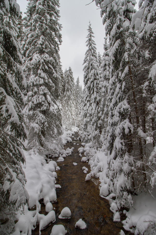 Winter mountain stream with rocks in forest covered by snow. stock images