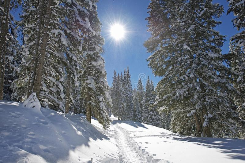 Winter Mountain Trail royalty free stock image