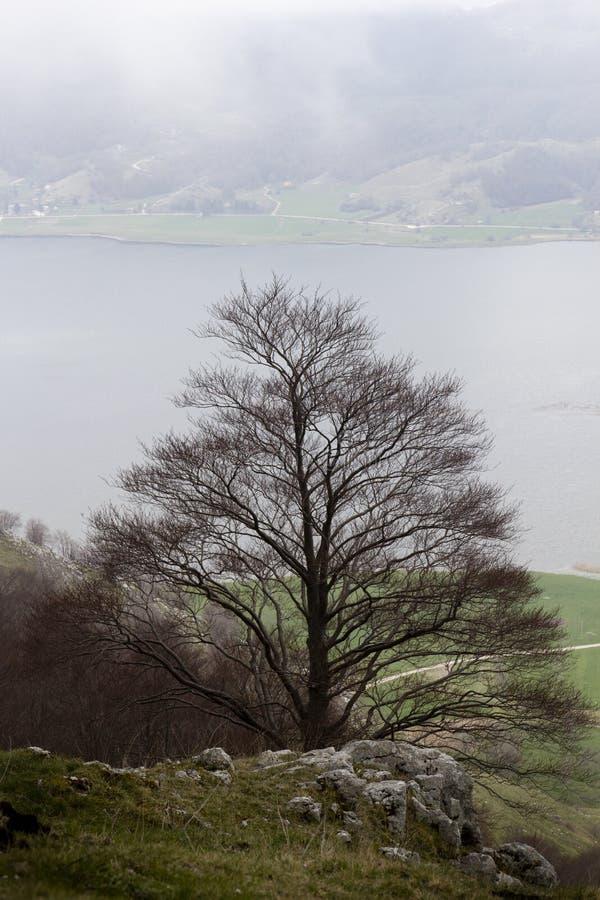 Winter mountain trees. In matese park royalty free stock photos