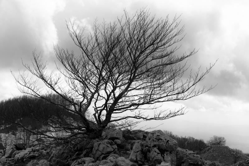 Winter mountain trees. In matese park in BW stock images