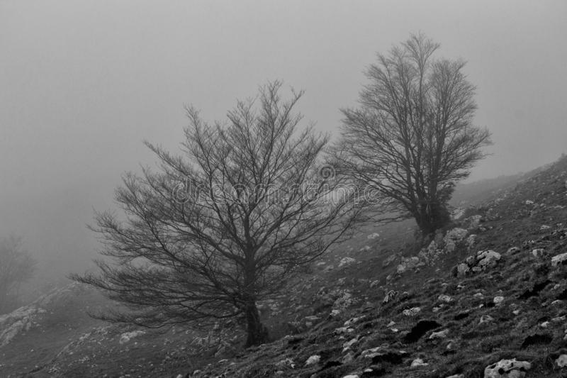 Winter mountain trees. In matese park in BW royalty free stock photo