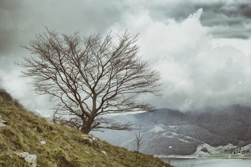 Winter mountain trees. In matese park royalty free stock photography