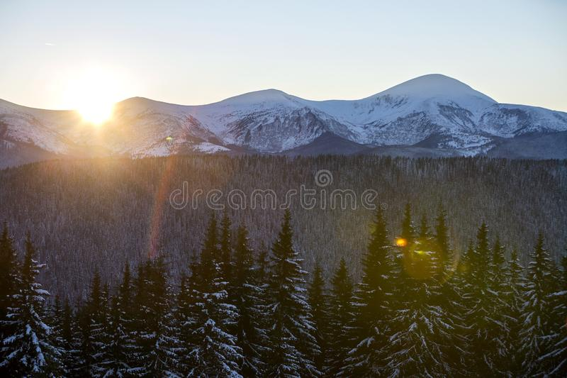 Winter mountains landscape panorama at sunrise. Clear blue sky over dark spruce pine trees forest, covered with snow mountain stock photo
