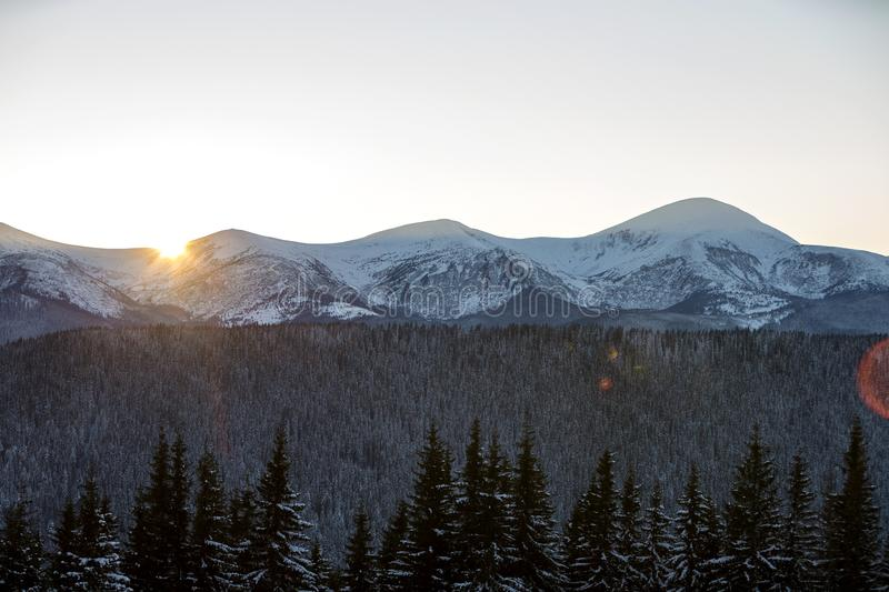 Winter mountains landscape panorama at sunrise. Clear blue sky over dark spruce pine trees forest, covered with snow mountain stock image