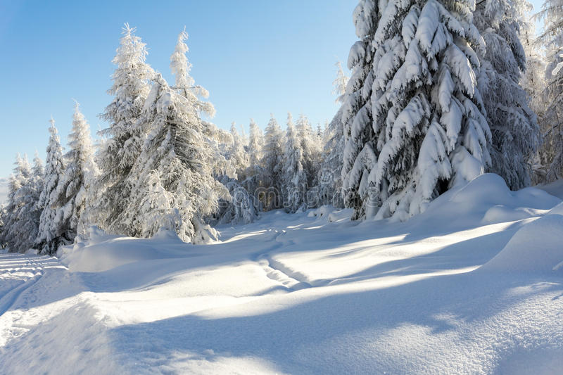 Winter mountains landscape. Trees covered with fresh snow stock images