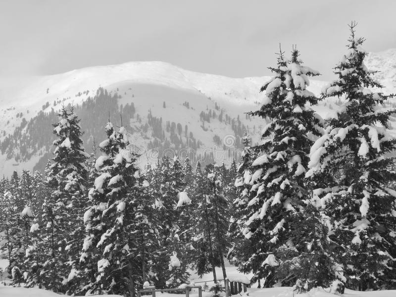 Winter in the mountains. On the plateau of Hochkrimml, Austria, Europe royalty free stock photo