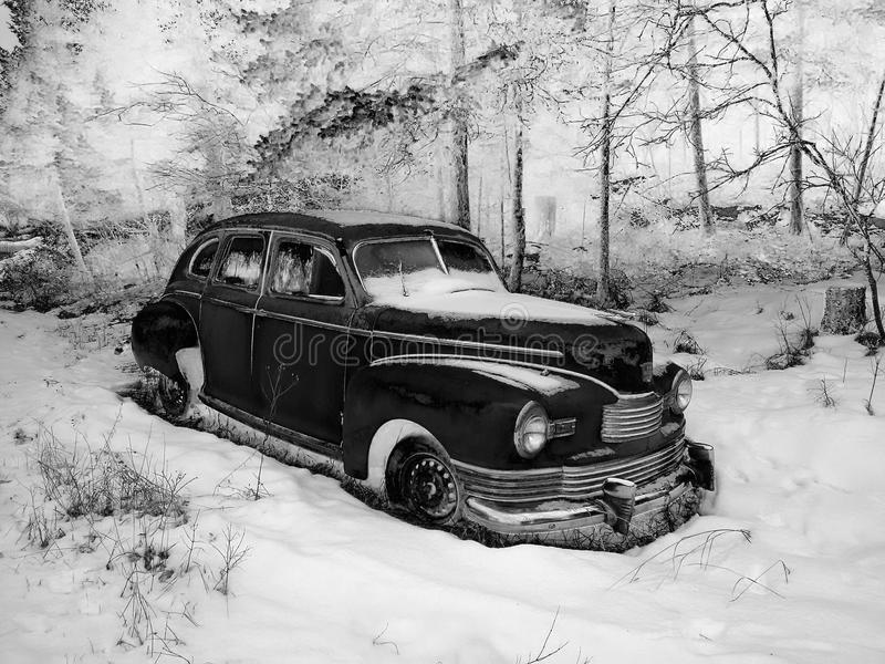 Winter Nash. Nash black and white royalty free stock photos
