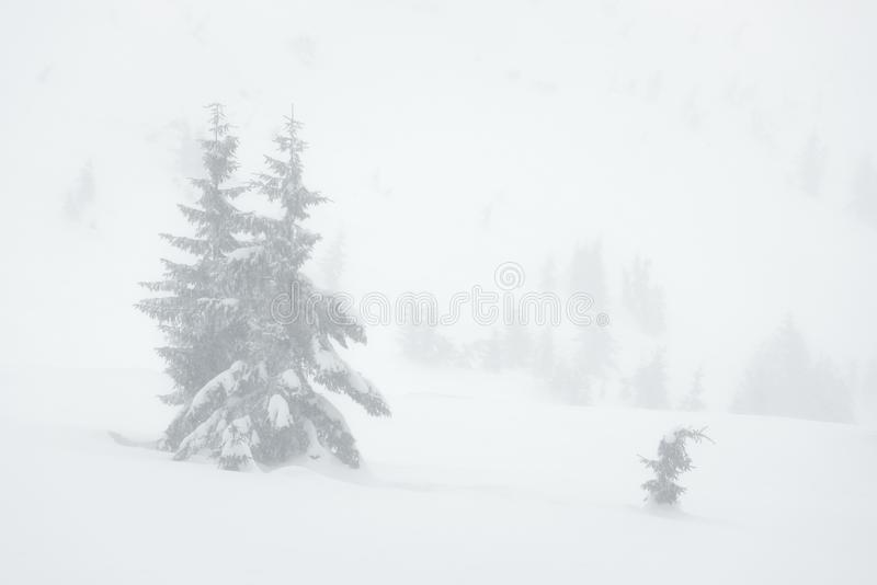 Winter natural background with snow white view royalty free stock images