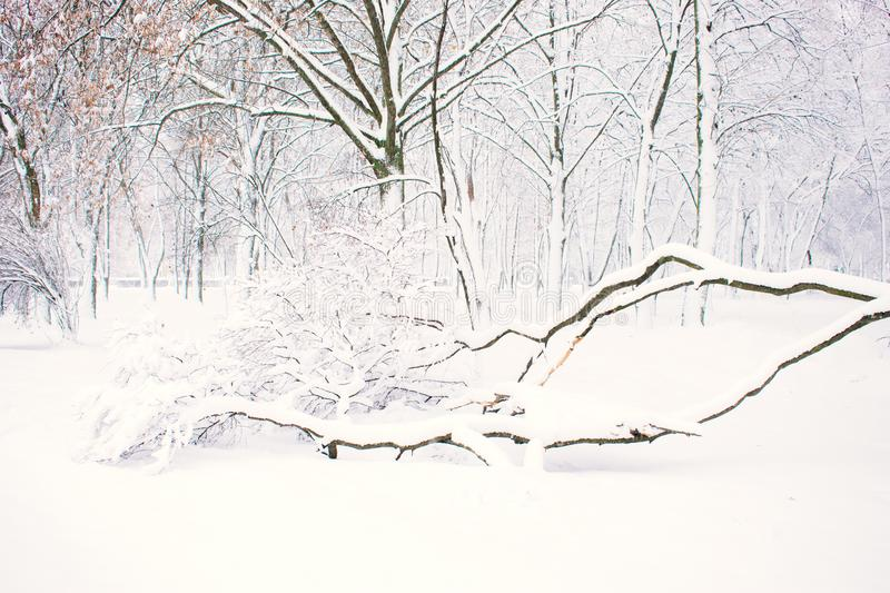 Winter nature background, landscape. Winter forest, park with snowy fallen trees. Winter bad weather, storm, blizzard, snow drifts. A lot of snow. Selective stock photography