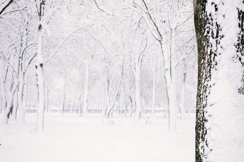 Winter nature background. Winter forest, park with snowy trees. Christmas concept. Selective focus. Winter nature background, landscape. Winter forest, park with stock photos