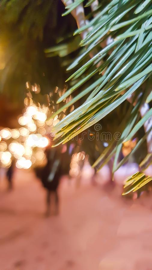 Winter nature background in the city Spruce tree with garland lights in park. Winter nature background. Spruce tree with garland lights in park royalty free stock photography