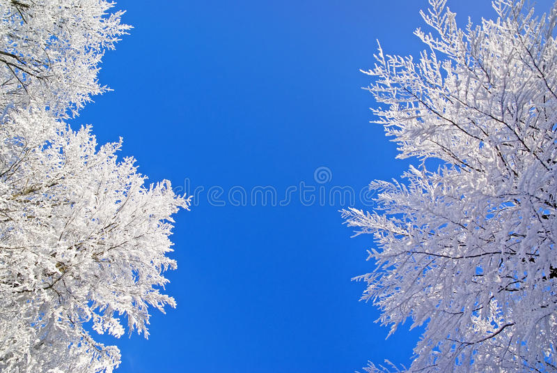 Winter nature beauty royalty free stock photos