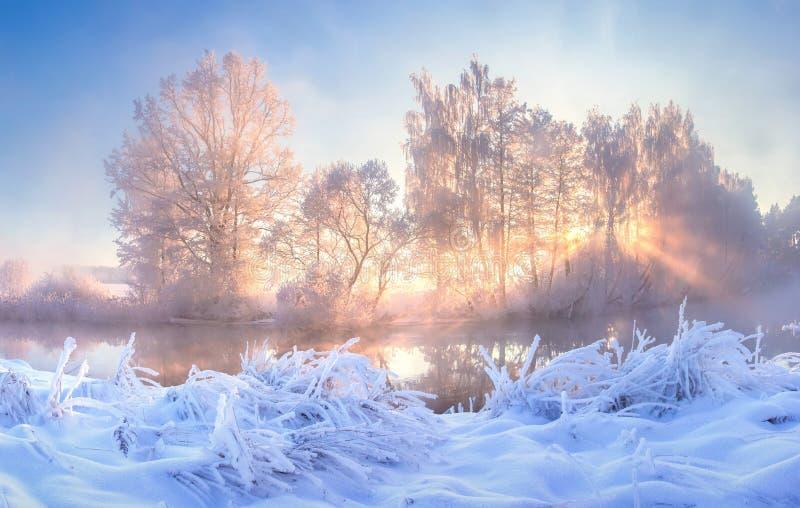 Winter nature landscape. Frosty trees on river side. Winter morning sunrise. Amazing plants covered by hoarfrost. Winter nature landscape. Frosty trees on river stock image