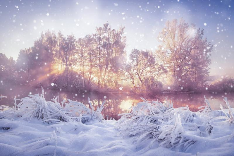 Winter nature landscape in snowfall. Snowy and frosty trees in morning sunlight. Christmas background.  stock photos