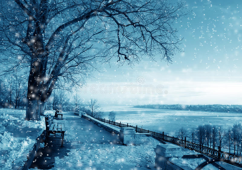 Winter nature in a snow royalty free stock photography