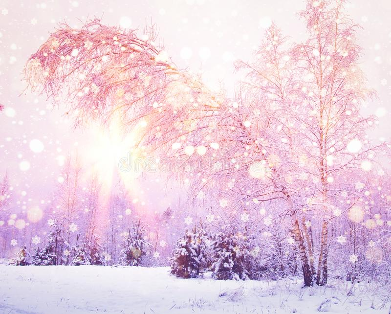 Winter nature at sunrise with pink light of sun. Colored snowflakes shining on sun. Snowy forest. Christmas background royalty free stock images