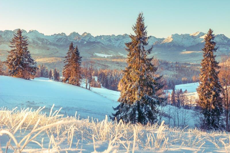 Winter nature in Tatra, Zakopane, Poland. Snowy Christmas trees on mountains valley in sunny morning. Scenery winter royalty free stock photos