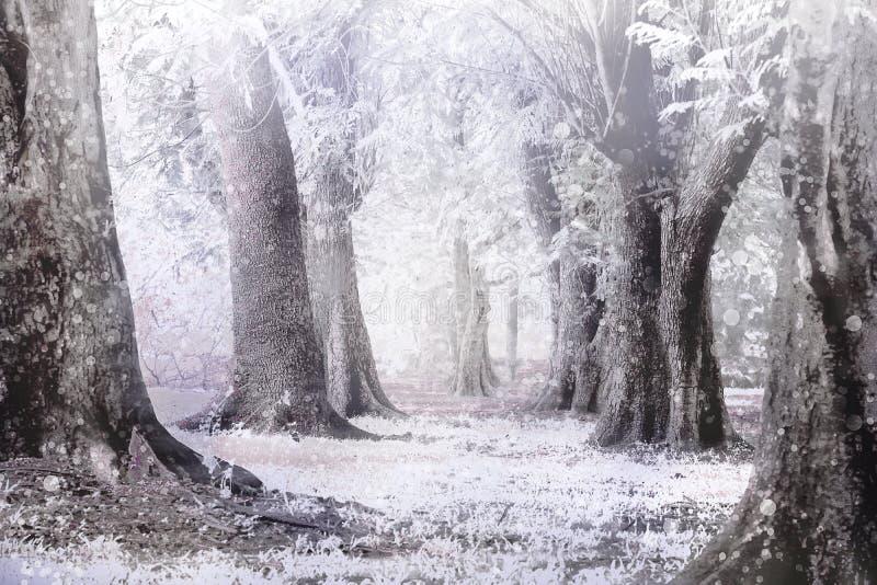 Winter nebelig und Schneesturm solf und blure Fokus lizenzfreie stockfotos