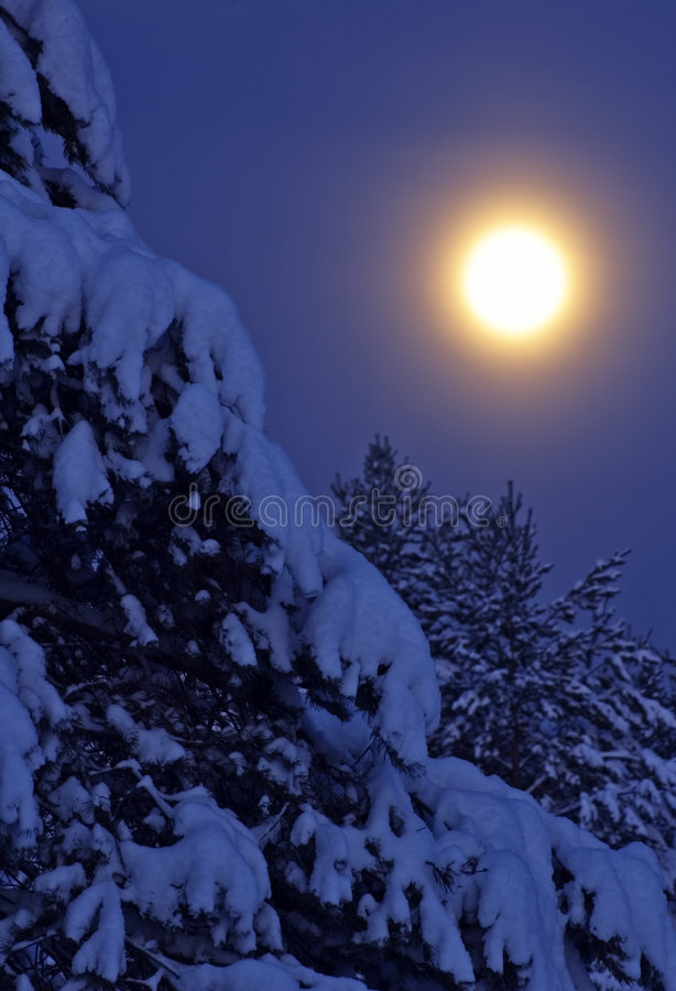 Winter night. See more similar images in my portfolio royalty free stock photography