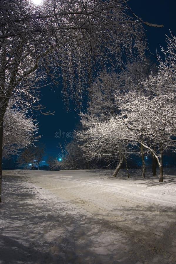 Free Winter Night Stock Photos - 1890703