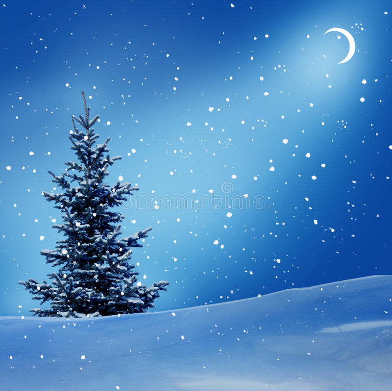 Winter night. With moon, spruce trees and snow royalty free stock photos