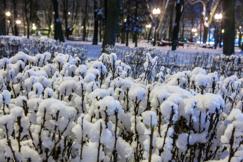 Download Winter in the night city stock image. Image of trees - 83711093