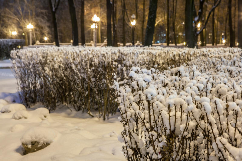 Download Winter In The Night City Stock Photo - Image: 83711452