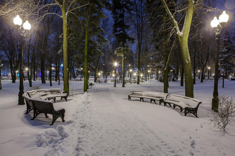 Download Winter in the night city stock image. Image of nature - 83711971