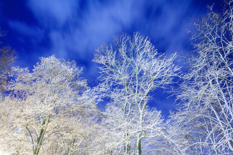 Download Winter In The Night City Stock Photo - Image: 83712250