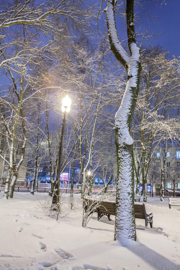Download Winter in the night city stock photo. Image of christmas - 83712256