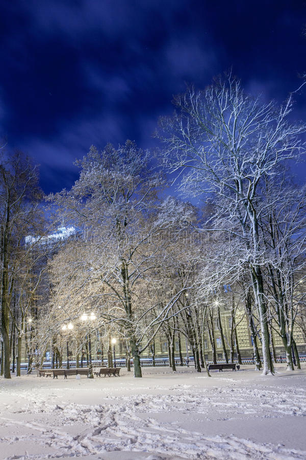 Download Winter in the night city stock image. Image of park, trees - 83712481